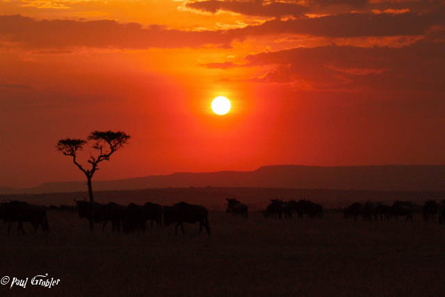 Sunset - Serengeti National Park
