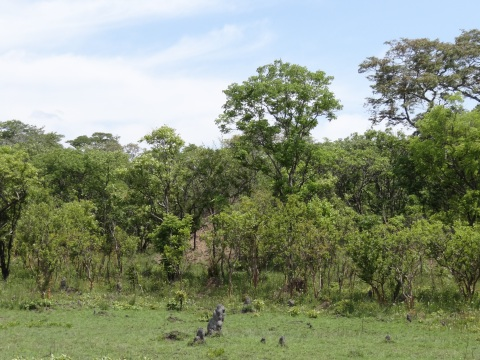Woodland area around Cassins Camp