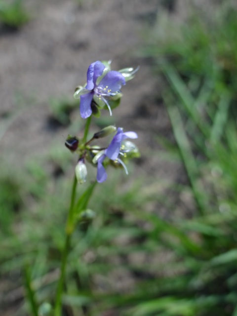 One of many flower species to identify