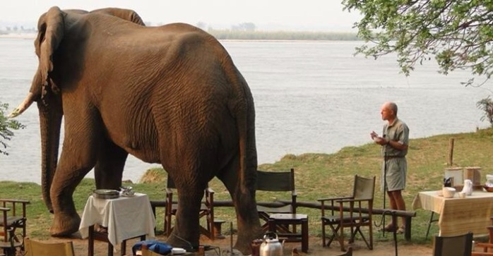 Paul Grobler and Lumpy -Chiawa Camp - Zambia ( By G. Cumings)